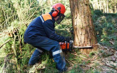 Riesgo por sobrecarga biomecánica postural en técnicas de tala y apeo en el sector forestal: Uso del método OWAS